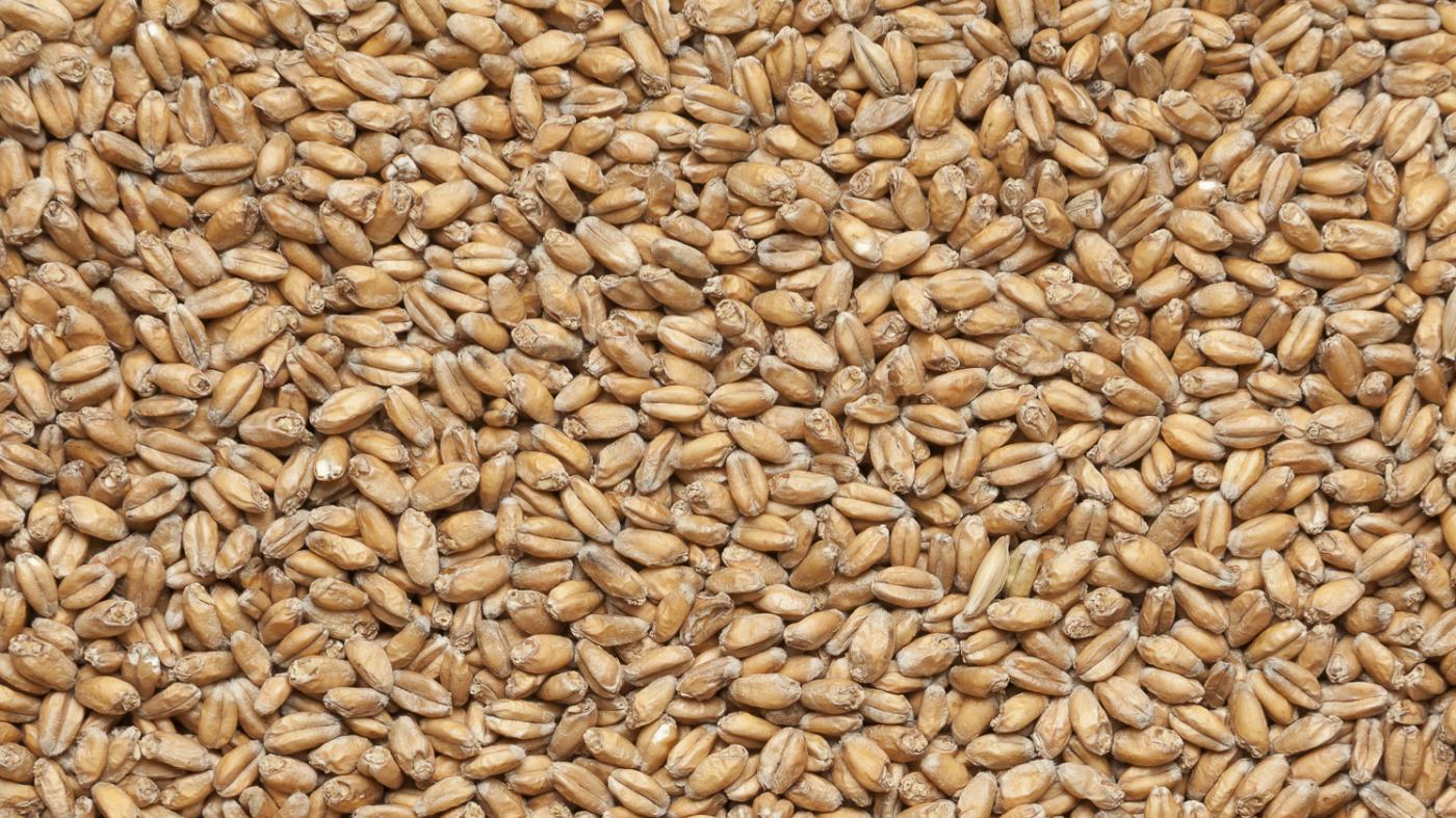 Wheat malt, Viking malt